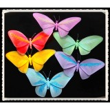 "NL2437XL-22"" BUTTERFLY DECOR"